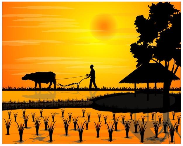 Silueta agricultor arado en diseño vectorial de campo de arroz