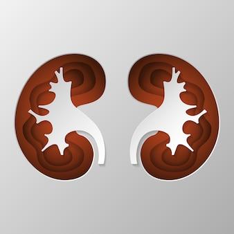 La silueta marrón del riñón está tallada en papel.