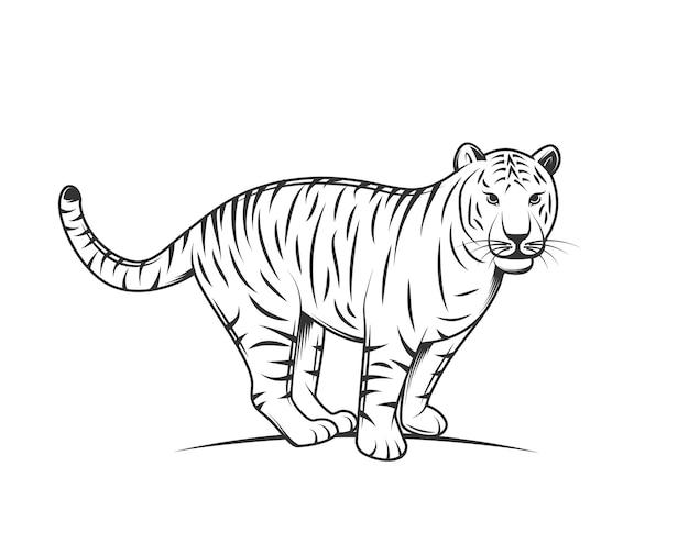 Silueta de tigre aislado sobre fondo blanco.