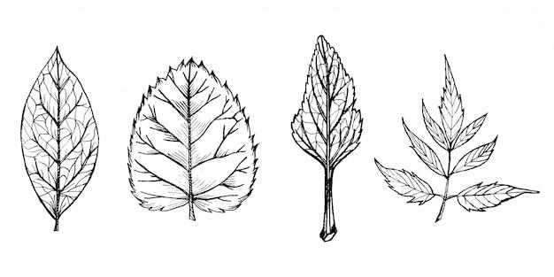 Siluetas dibujadas a mano en blanco y negro de hojas de los árboles en vector