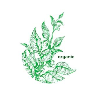 Símbolo de arbusto de té en círculo art sketch planta verde orgánica