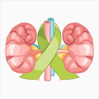 Símbolos para la ilustración de vector de conciencia renal