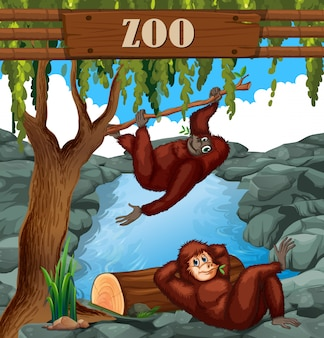 Simio en el zoo