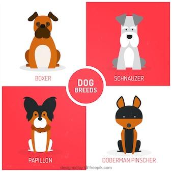 Simpáticas razas de perro