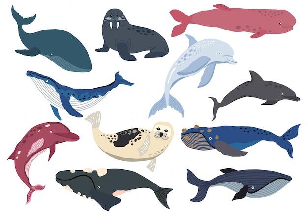 Simple personaje de ballena, delfín, león marino