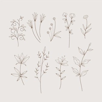 Simplistas hierbas botánicas y flores silvestres en estilo vintage