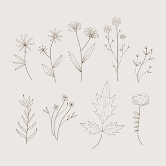 Simplistas hierbas botánicas y flores silvestres