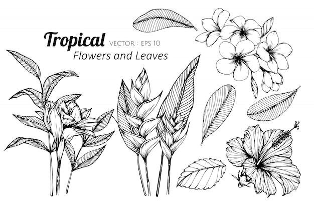 Sistema de la colección del ejemplo tropical del dibujo de la flor y de las hojas.