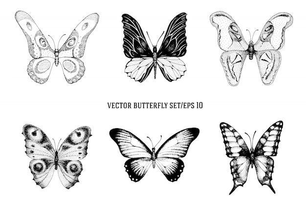 Sistema dibujado mano del vector del vintage del vector de mariposas hermosas en un fondo blanco. ilustración retro