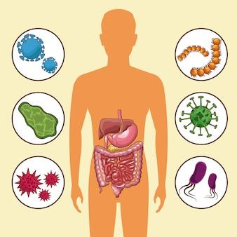 Sistema digestivo con bacterias