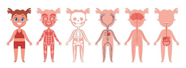 Sistemas del cuerpo de niña anatomía humana esqueleto músculos nervios venas del corazón órganos digestivos imagen