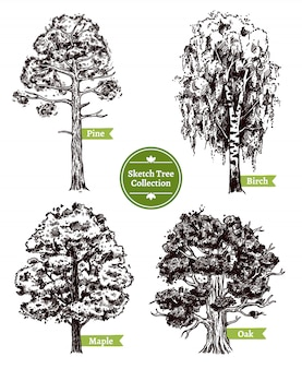 Sketch tree set