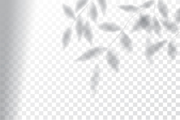 Sombra, maqueta de efectos superpuestos, marco de ventana y hoja de plantas