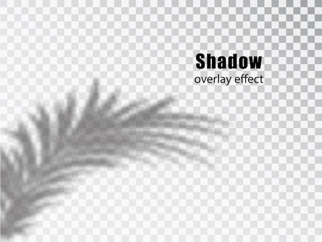 Las sombras superponen el efecto transparente de las hojas. efecto de superposición creativa para maquetas