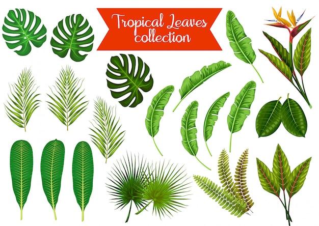 Stock vector conjunto de ilustración de objeto de hojas tropicales