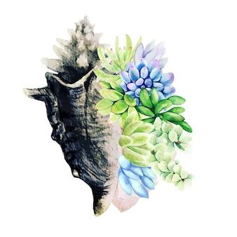 Suculentas de acuarela brillante en concha de mar goliat, dibujadas a mano