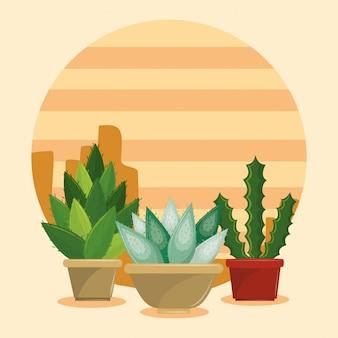 Suculentas de cactus en maceta en el desierto