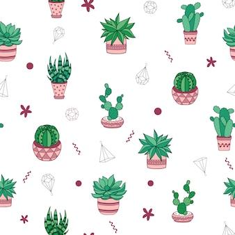 Suculentas y cactus en macetas.