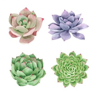 Suculentas cactus pintadas a mano en acuarela de la colección.