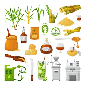 Superalimento de cañas de azúcar aislado en blanco. tallo con hojas y azúcar granulada, planta dulce ecológica orgánica, botella de ron bio. producción de fabricación de glucosa de caña de azúcar.
