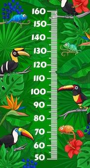 Tabla de altura para niños con tucanes de dibujos animados y camaleones en hojas tropicales de la selva. medidor de pared de medida de crecimiento con escala de regla en centímetros sobre fondo de animales exóticos, lagartos y flores