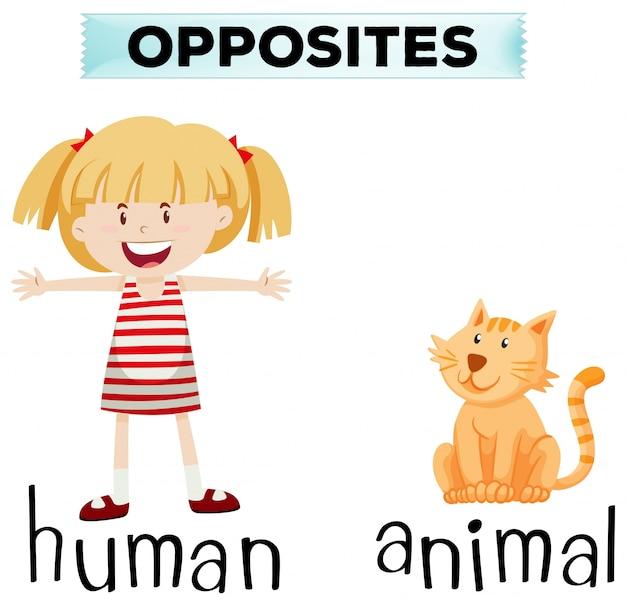 Tarjeta de palabra opuesta para humanos y animales