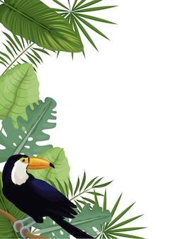 Tarjeta, tucán, tropical, palma, hojas, decoración