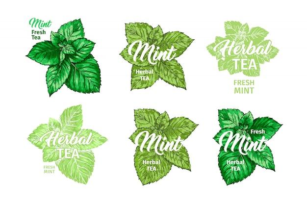 Té de hierbas con menta fresca etiqueta plantillas conjunto.