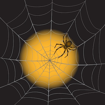 Telaraña con araña en la luz de la luna.