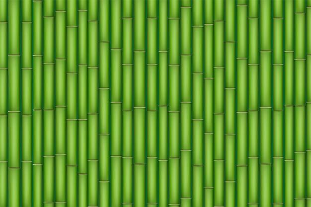 Textura de bambú verde