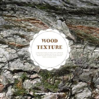 Textura de madera con musgo