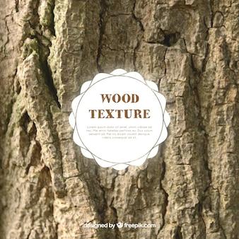 Textura de madera de tronco de árbol viejo