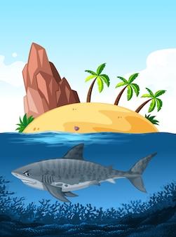 Tiburon nadando bajo el mar