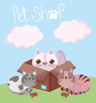 Tienda de mascotas, gato en caja de cartón y gatitos con dibujos animados domésticos de animales de peces galleta
