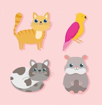 Tienda de mascotas, gatos lindos pájaro y hámster animal doméstico ilustración vectorial de dibujos animados