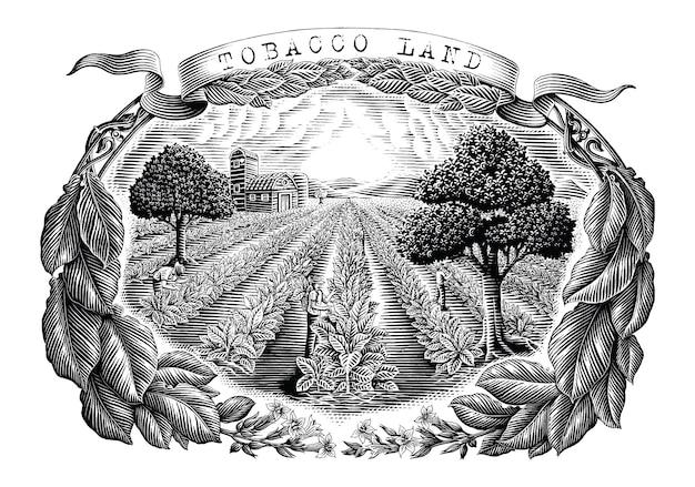 Tierra de tabaco dibujar a mano estilo de grabado vintage imágenes prediseñadas en blanco y negro aislado sobre fondo blanco
