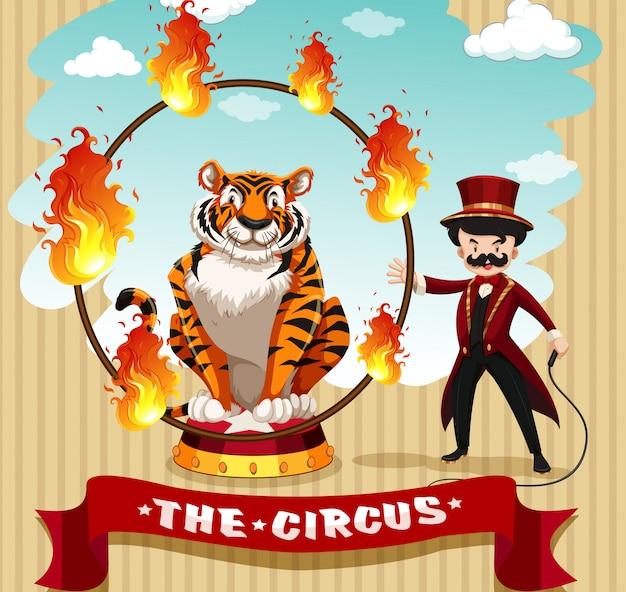 Tiger in fire hoop y ring master.
