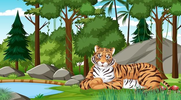 Un tigre en el bosque o la escena de la selva tropical con muchos árboles.