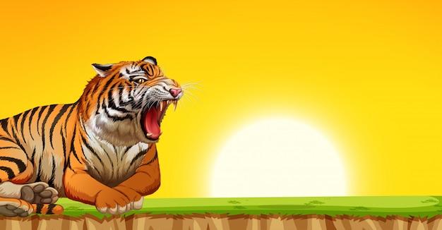 Un tigre en escena puesta de sol