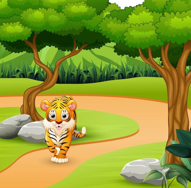 Tigre de miedo salvaje caminando en la selva