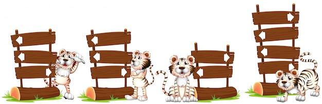 Tigres blancos junto al cartel de madera.