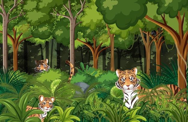 Tigres escondidos en el fondo del bosque tropical