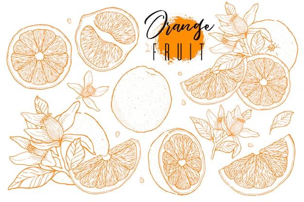 Tinta dibujada conjunto de fruta naranja.