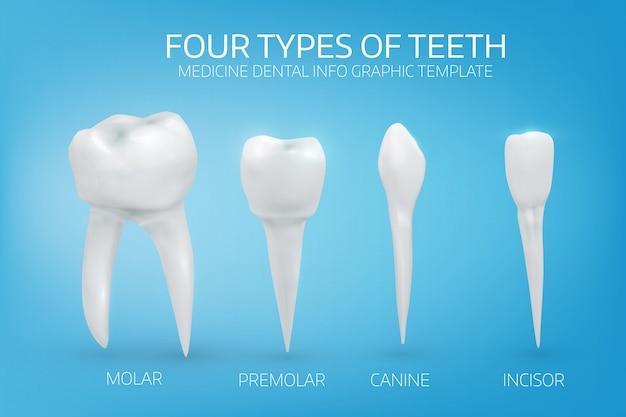 Tipos de dientes humanos sobre fondo azul