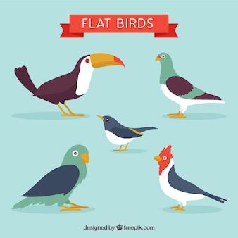 Tipos de pájaros en un estilo plano