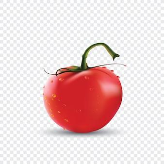 Tomate rojo fresco con gotas de agua.
