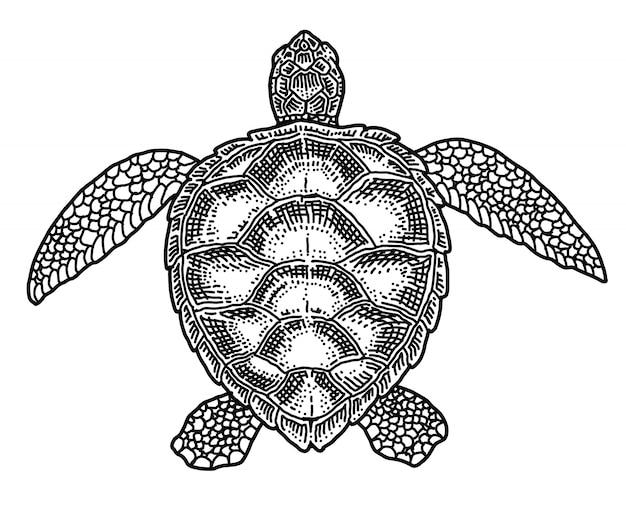 Tortuga, doodle dibujado a mano ilustración vectorial.