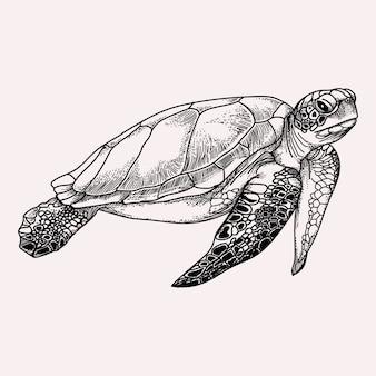 Tortuga marina, blanco y negro, ilustración