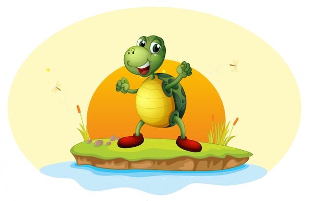Una tortuga en una pequeña isla.