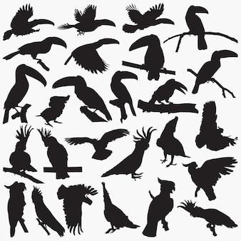 Toucan cockatoos siluetas